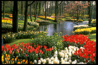 At the Keukenhof in the Netherlands