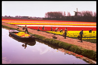 Deadheaded flowers being loaded onto a canal barge