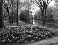 1948 Tulips & the Driveway with bicycles.