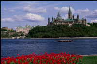 Tulips with Parliament Hill from across the Ottawa River